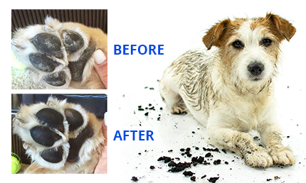 How Do You Use the ProntoPaw Dog Paw Cleaner?