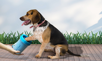 How you will keep your Surrounding also your Dog clean with ProntoPaw?